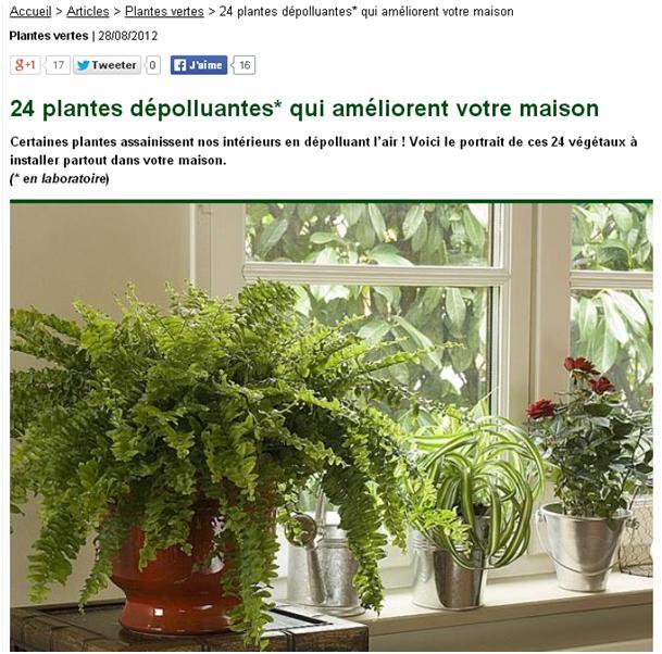 plantes d 39 int rieur non elles ne d polluent pas le logement. Black Bedroom Furniture Sets. Home Design Ideas