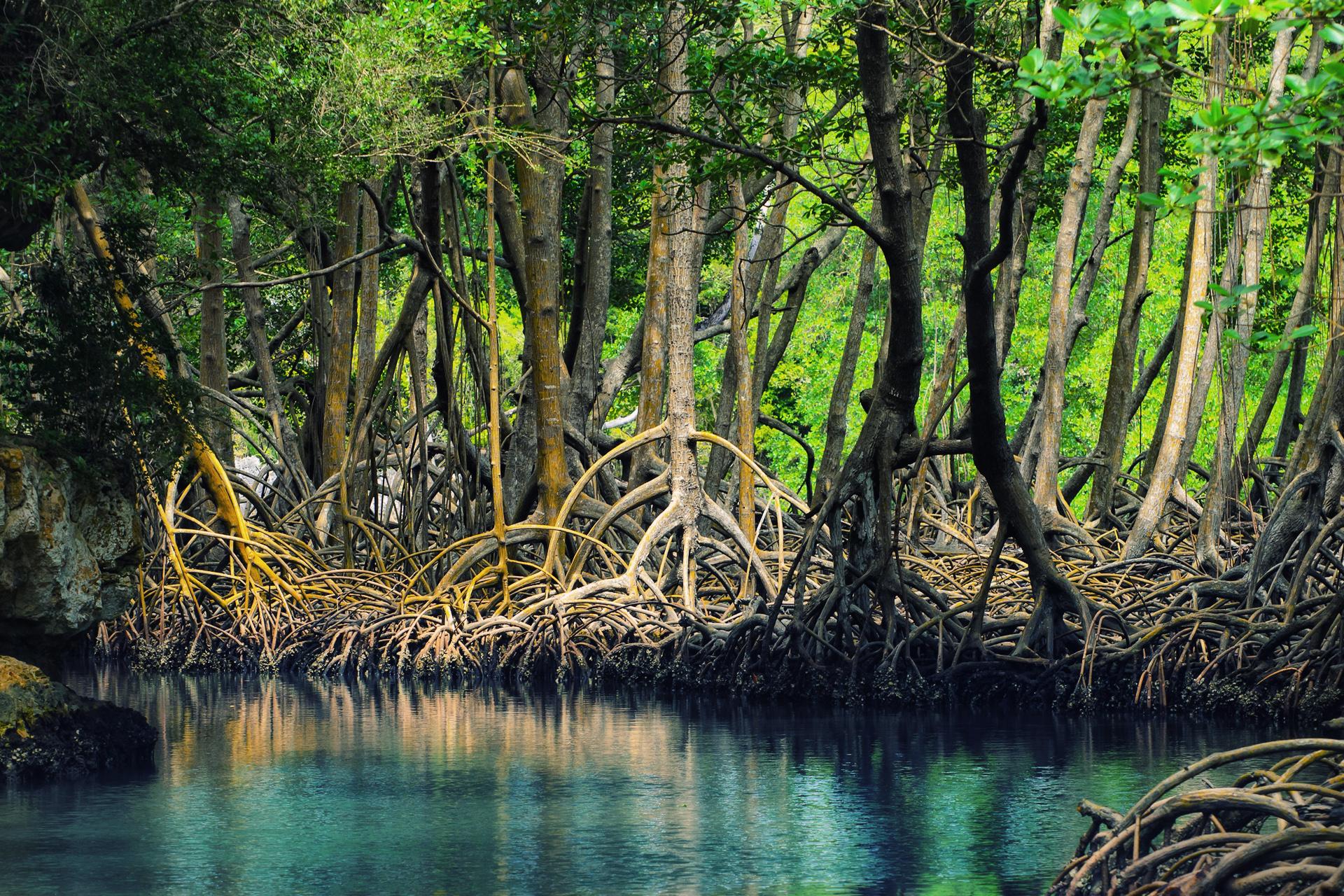 Mangrove_biodiversite